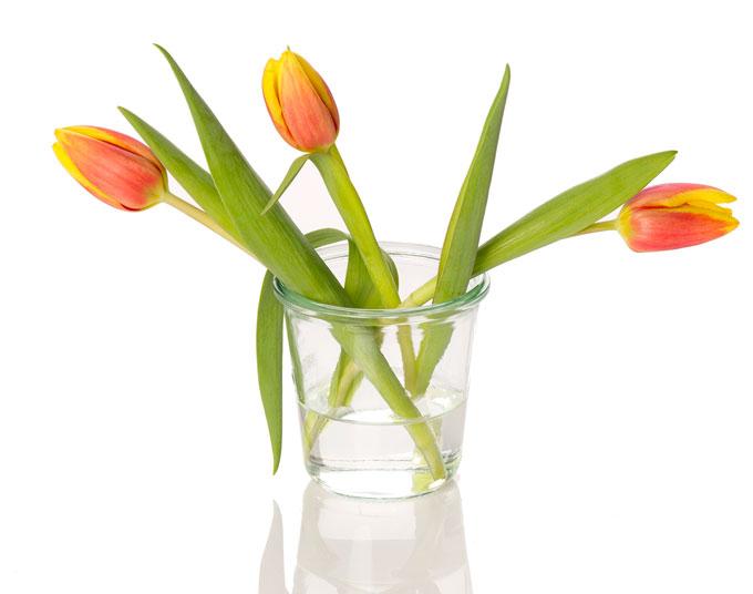 produktfoto-tulpen